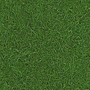 GRASS 25.tif
